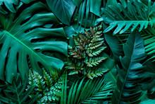 Closeup Nature View Of Green M...