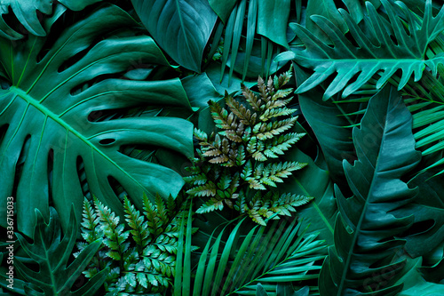 Fototapete - closeup nature view of green monstera leaf and palms background. Flat lay, dark nature concept, tropical leaf