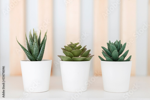 Photo three white pots with green decorative plants on a white background with wooden