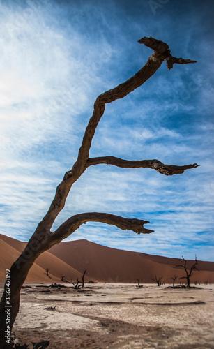 Fototapeta Dead tree in the Namibia desert obraz na płótnie