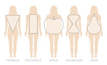 Woman Body Shape Triangle, Rectangle, Apple, Pear And Hourglass