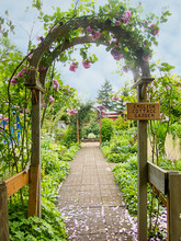 English Cottage Garden With An Arch Trellis And Pink Roses Growing Over It Along A Brick Garden Path In Summer.