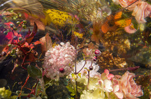 Multicolored Flowers Inside In Water, Black Background, Soft Focus