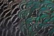 Leinwandbild Motiv Pfauenfedern Nahaufnahme