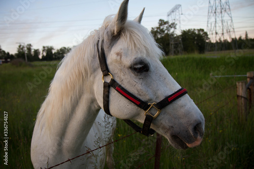 White horse in grass field