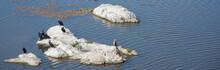 Cormoran, Bird Phalacrocorax, Family Phalacrocoracidae, Six Cormorants Sunbathing On Rock In The Middle Of The Water
