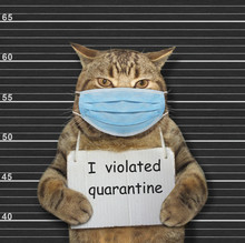 The Beige Cat In A Surgical Protection Face Mask Was Arrested. It Has A Sign Around Its Neck That Says I Violated Quarantine. Coronavirus. Lineup Black Background.