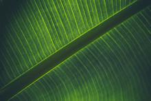 Full Frame Shot Of Banana Leaf