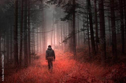 Man walking alone in magical dark orange red colored foggy wild forest landscape.