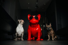 Two French Bulldog Dogs Posing...