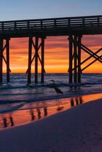 Great Blue Heron In Florida