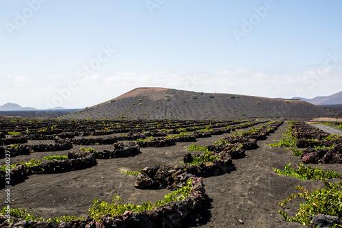 Obraz La Geria, wine area in Lanzarote - fototapety do salonu