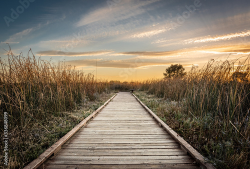 Obraz na plátně Golden hour landscape of a wooden hiking path surrounded by wild grass flowing in the wind in the wetlands of the Cosumnes River Preserve in Galt California with the sun setting on the horizon