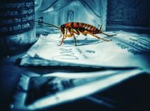 Cockroach On Shampoo Packet