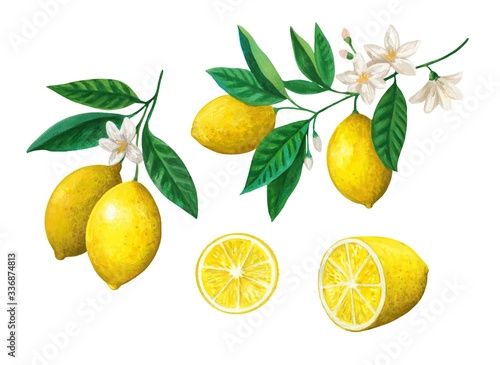Watercolor set of lemon fruits, branches and flowers.