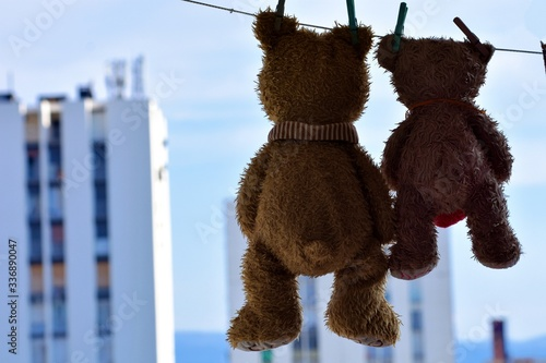 A teddy bears hangs from a clothesline after a washing #336890047