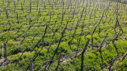 vineyard in spring photographed with drone lambrusco modena
