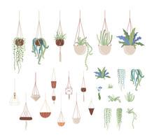 Domestic Plants And Hanging Pots Flat Vector Illustrations Set