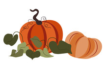Ripe Big Pumpkins With Leaves, Autumn Harvesting Vector