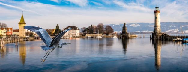 Graureiher fliegt im Hafen von Lindau Bodensee