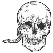 A Snake Crawls Out Of The Eye Of A Human Skull.