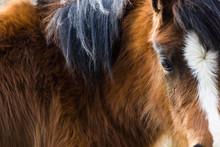 Beautiful Welsh Mountain Pony