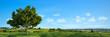 Natur Landschaft mit Baum und einem blauen Himmel