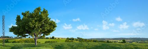 Natur Landschaft mit Baum und einem blauen Himmel Tapéta, Fotótapéta
