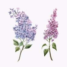 Beautiful Vector Watercolor Floral Set With Pink Lilac Flowers. Stock Illustration.