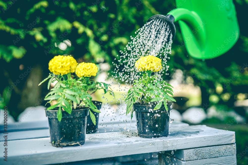 Fototapeta Kwiaty w ogrodzie