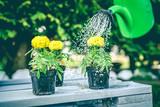 Fototapeta Kwiaty - Kwiaty w ogrodzie