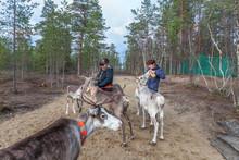Two Women Feed Reindeer, Sami, Saami Village On The Kola Peninsula, Russia. Tourist Ethnographic Parking. Settlement Old Titovka, Murmansk Region.