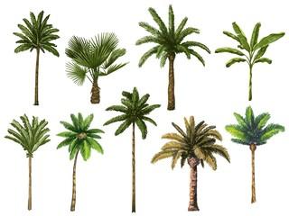 Šarene rukom nacrtane palme. Retro tropsko kokosovo drveće, vintage miami palmi vektorska ilustracija postavljena. Palma tropskog drveća, zelena cvjetna botanička