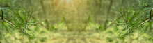 Panorama Of Detail Shot Of A P...