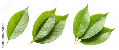 Fototapeta Set of green leaves, isolated on white background obraz na płótnie