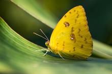 Butterfly Posing On A Leaf. Costa Rica. Pura Vida.