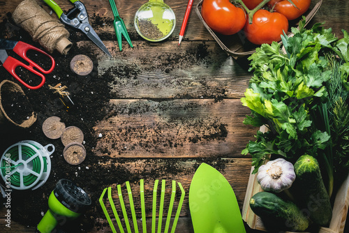 Obraz Vegetables harvesting and gardening work tools on wooden table flat lay background with copy space. - fototapety do salonu