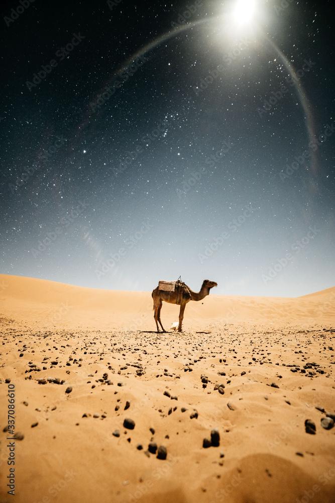 Camel standing in desert at night