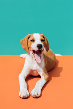 Puppy On Colorful Background
