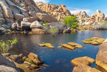 Water In Desert. The Reservoir Above The Barker Dam In Joshua Tree National Park, California