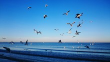 Birds Flying Over Sea Against Clear Blue Sky