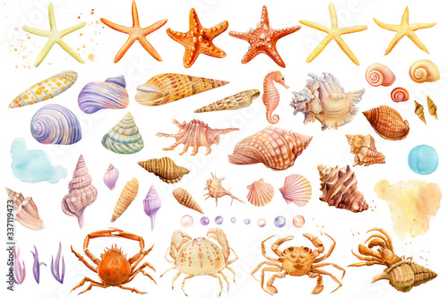 Carta da parati Watercolor starfish, shells, crabs, seahorse on an isolated background, hand dra