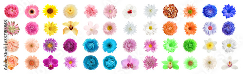 Set of different beautiful flowers on white background Canvas Print