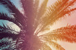 canvas print picture - Beautiful tropical palm tree outdoors, toned in pink