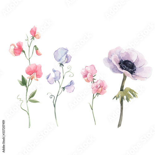 Beautiful vector watercolor floral set with anemone and sweet pea flowers Canvas Print