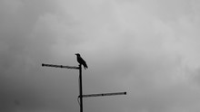 Silhouette Raven Perching On Television Aerial Against Cloudy Sky
