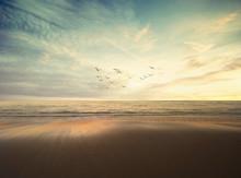 Flock Of Birds Flying Over Beach Against Sky