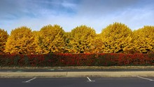 Beautiful Panoramic Shot Of An Empty Parking Lot With Red Flowers And Yellow Trees