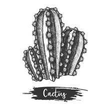 Sketch Of Cactus Or Hand Drawn...