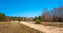 Sand Strips In The Forest On T...